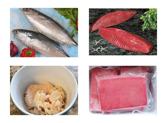 Sơ chế cá ngừ