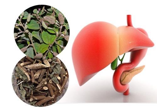 Tác dụng chữa bệnh tuyệt vời của cây an xoa hình 4