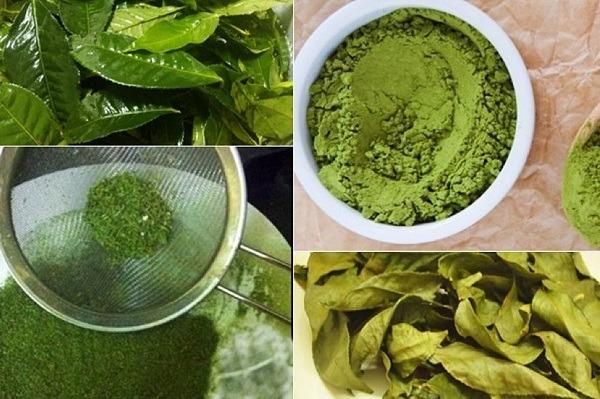 Cách làm bột trà xanh từ lá trà tươi nguyên chất tại nhà hình 1